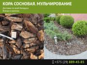 Мульчирование и кора сосновая в Минске